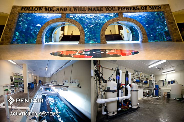 Underwater themed environment church iboc inspiring for Fish store dallas